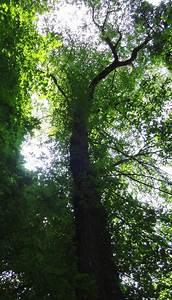 Grenzabstand Bäume Nrw : monumentale b ume klippe in velbert langenberg nordrhein westfalen deutschland ~ Frokenaadalensverden.com Haus und Dekorationen