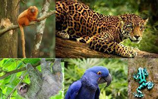 art  hosmer endangered animals   amazon rainforest