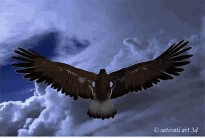 Eagle Flying Gifs Tenor Media1