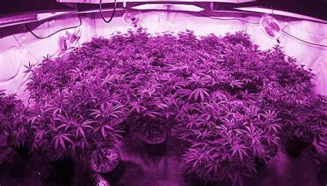 led lights for growing cannabis the best led grow lights for extraordinary cannabis the