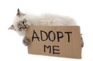 adopt cat brisbane pet adoptions brisbane pet adoptions pet