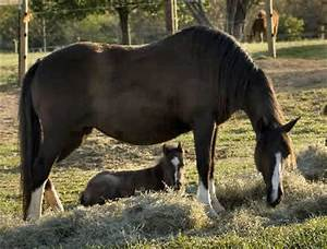 Horses Mating | www.pixshark.com - Images Galleries With A ...