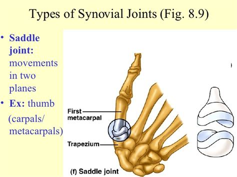 joint saddle ppt unit joints movements planes synovial types ul two