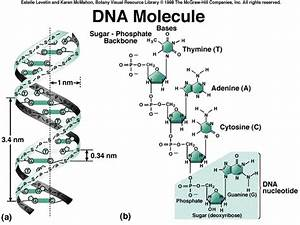 Dna Molecule Drawing At Getdrawings