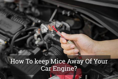 will keeping lights on keep mice away how to keep mice away of your car engine update 2017