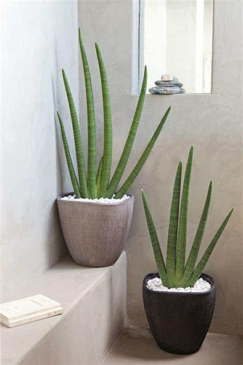 couleur pour une chambre d adulte la plante verte d 39 intérieur