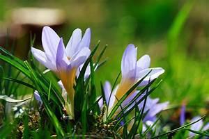 Was Sind Frühlingsblumen : fr hlingsblumen bilder kostenlose und lizenzfreie fotografien sofort und ohne anmelden nutzen ~ Whattoseeinmadrid.com Haus und Dekorationen