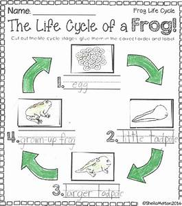 Frog Book - 2018-2019