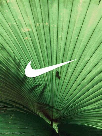 Exotic Tropical Aesthetic Tropic Jungle Vibes Coconut