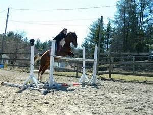 Combien De Chevaux : combien pencez vous que ses de pied photos de chevaux l 39 obstacle cso ~ Medecine-chirurgie-esthetiques.com Avis de Voitures