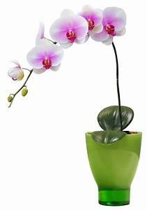 stickers pot orchidee pas cher With déco chambre bébé pas cher avec fleur orchidée