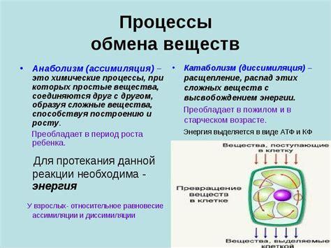 Читать реферат по физике возникновение и развитие объединенных энергосистем . скачать бесплатно рефераты отзывы