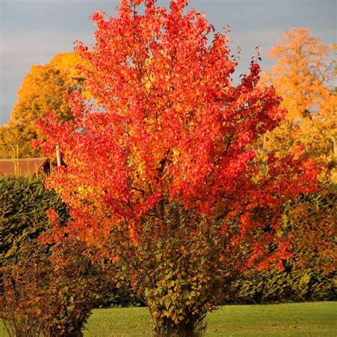 Oktobrī 🍁🌾#rudens #augi #garden #plants | Plants, Garden