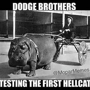 Bodge Memes