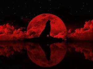 Wolf howling to the red moon   Wolves   Pinterest   Night ...