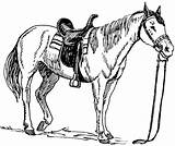 Clipart Saddle Domain Horse Clip Cliparts sketch template