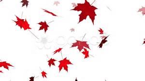 hd loopable falling maple leaves animation stock 11824930 hd stock footage