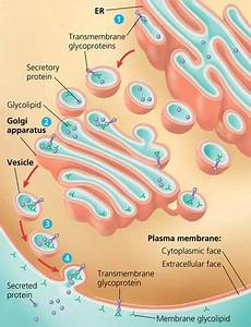 Scientific Videos  Cell Membrane Structure And Function