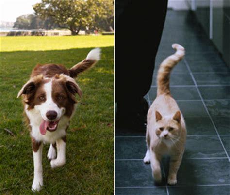 Reading Cat And Dog Body Language