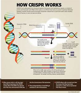 How genes are edited using CRISPR-Cas9 - Livemint