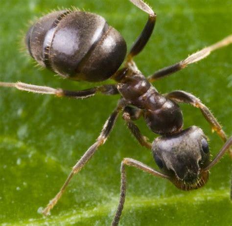 was kann gegen ameisen tun was tun gegen ameisen im garten was tun gegen ameisen im