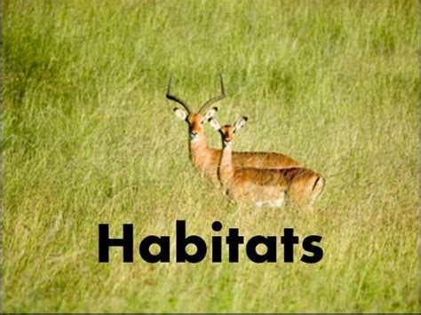 A species habitat can be seen as the physical manifestation of its ecological niche. Habitats of Animals-What is a Habitat? -Video Lesson ...
