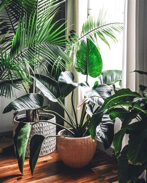 schoene einrichtungsidee fuers wohnzimmer gruene pflanzen