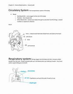 Chapter 3  U2013 Human Body Systems  U2013 Study Guide Circulatory