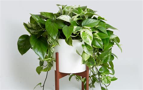 8 Super Cute Indoor Plants To Buy Right Now