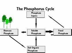 Phosphorus Cycle Simple   www.pixshark.com - Images ...