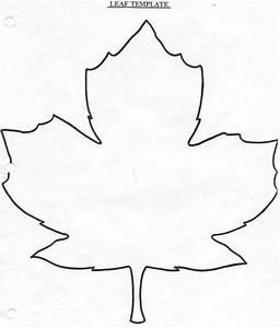 Information About Maple Leaf Drawing Template