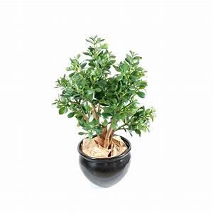 Plante Grasse Artificielle : doronic semer planter multiplier entretenir jaime ~ Teatrodelosmanantiales.com Idées de Décoration