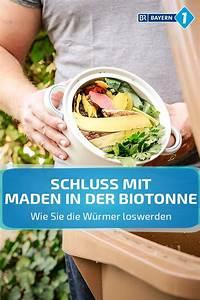 Was Tun Gegen Maden Im Mülleimer : maden in biotonne was tun gegen maden in der biotonne ~ A.2002-acura-tl-radio.info Haus und Dekorationen