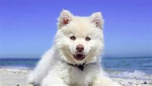 Urlaub Mit Hund Die Beliebtesten Reiseziele In