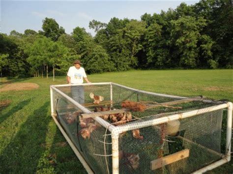 Backyard Poultry Farming Explained By Soil Scientist