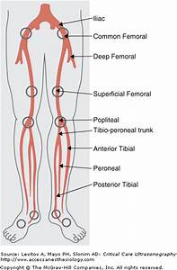 Can A Person With Damaged Arteries And Veins In The Leg