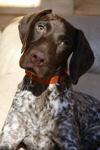 511 Best Images About Dog Breeds All On Pinterest