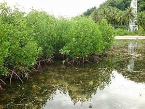 We Love Mangrove  Mengapa Ekosistem Hutan Mangrove  Hutan