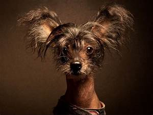 10 funny looking dogs that will make