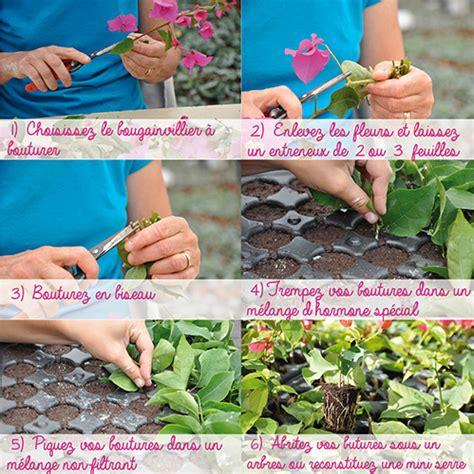 comment faire fleurir un bougainvillier en pot bougainvilliers tous 224 vos boutures le des tijardins et du cannebeth