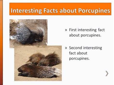 animal adaptations porcupine powerpoint activity