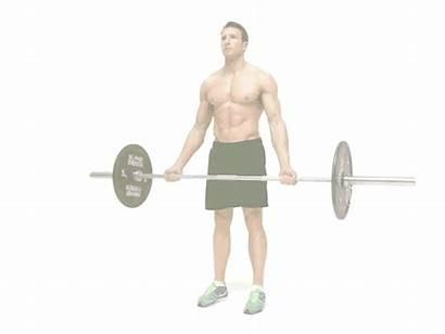 Curl Biceps Bulk Bicep Barbell Standing Muscle