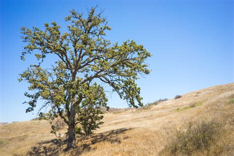 caring for trees most common questions about summer tree care davey blog