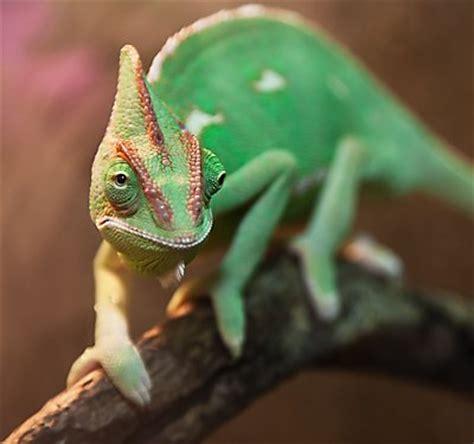 cool reptiles 7 best pet lizards snakes petsmart