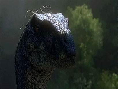 Jurassic Park Velociraptors Different Jp3 Male Raptors