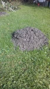 Hausmittel Gegen Ameisen Im Garten : was kann man gegen ameisen im rasen tun ameisen im rasen ~ Whattoseeinmadrid.com Haus und Dekorationen