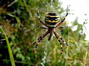Faire Fuir Les Araignées : pr server les araign es ~ Melissatoandfro.com Idées de Décoration