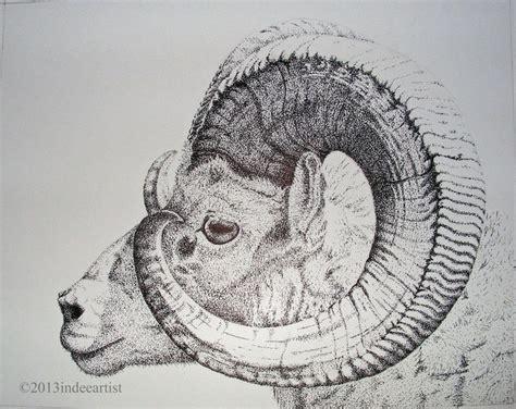 bighorn google bighorn pinterest horns