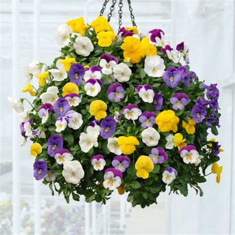 hanging flowers best plants for hanging baskets balcony garden web