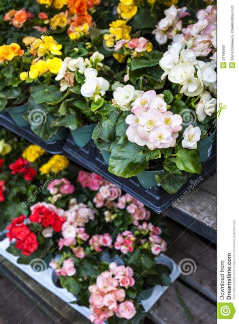 flowers  sale  nursery stock image image